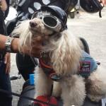biketoberfest 2015 Daytona